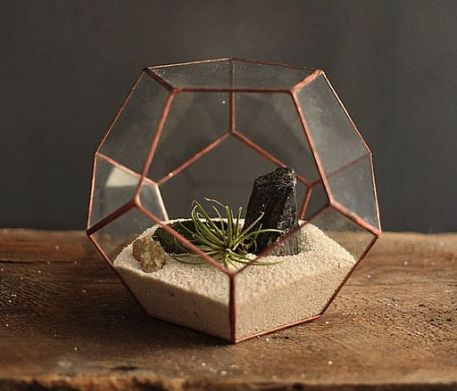 terrarium-the-eye-medium-512px-960px.jpg